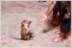 People feeding monkey, Batu Caves.