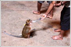 Man feeding monkey, Batu Caves.