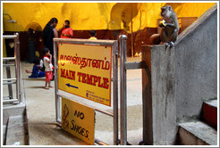 Monkey with signs reading Main Temple and No Shoes, Batu Caves.
