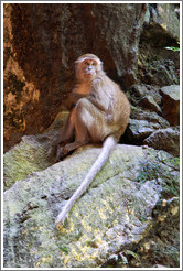Monkey crouching, Batu Caves.