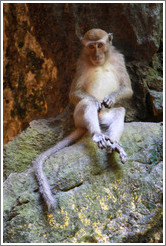 Monkey masturbating, Batu Caves.