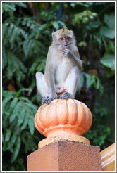 Monkey sitting on banister, stairway, Batu Caves.