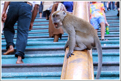 Monkey sitting on banister as people walk by, stairway, Batu Caves.