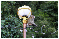 Monkey sitting on lamp post, stairway, Batu Caves.