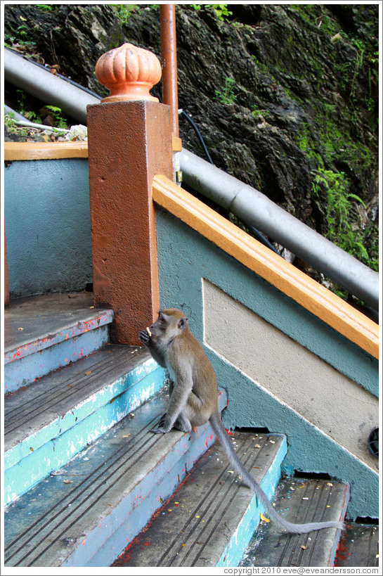 Monkey sitting on stairway, Batu Caves.