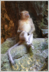 Monkey sitting, Batu Caves.