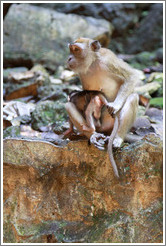 Mother and child monkeys, Batu Caves.  The mother is holding the child's tail to keep him from running off.