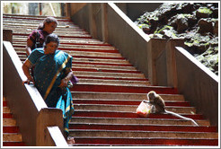 Women avoiding monkey who has just stolen someone's bag of food, Batu Caves.