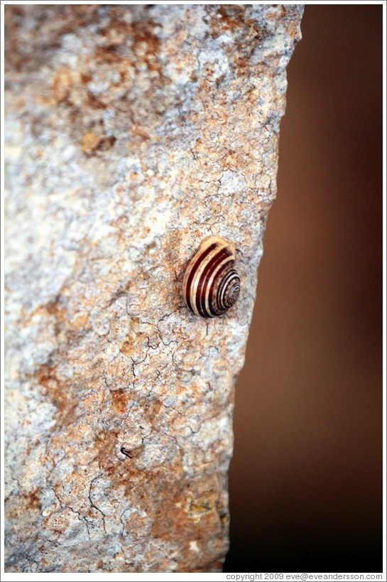 Snail at Mnajdra, a megalithic temple complex.