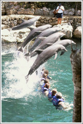 Dolphins.  Xcaret.