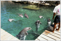 Feeding time for the dolphins.  Xcaret.