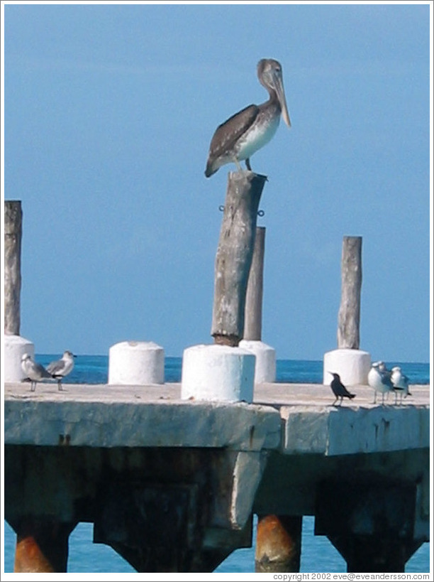 Bird on dock.