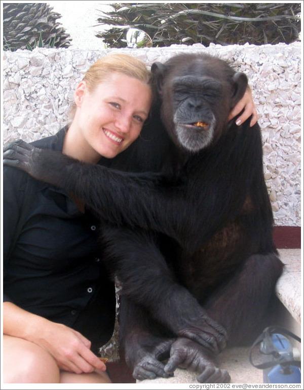 Eve And Coco A Sweet Chimpanzee Photo Id 10786 Cancun