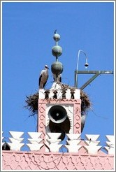 Stork on the tower of a mosque.