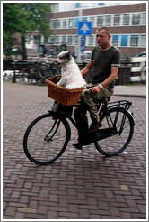 Bicyclist with dog in basket.