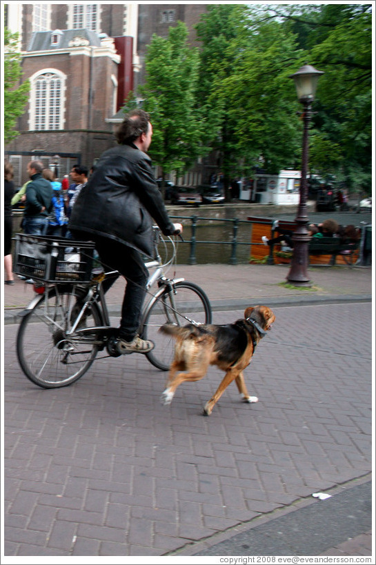 Bicyclist with dog.  Jordaan district.