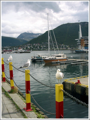 Birds on dock.