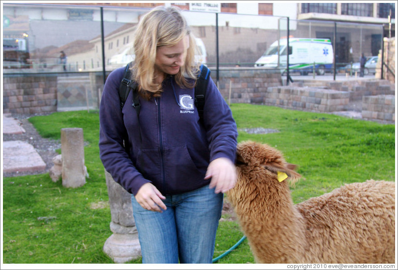 Eve being playfully bitten by Kusi, a young alpaca, at Kusikancha, an Inca site in central Cusco.