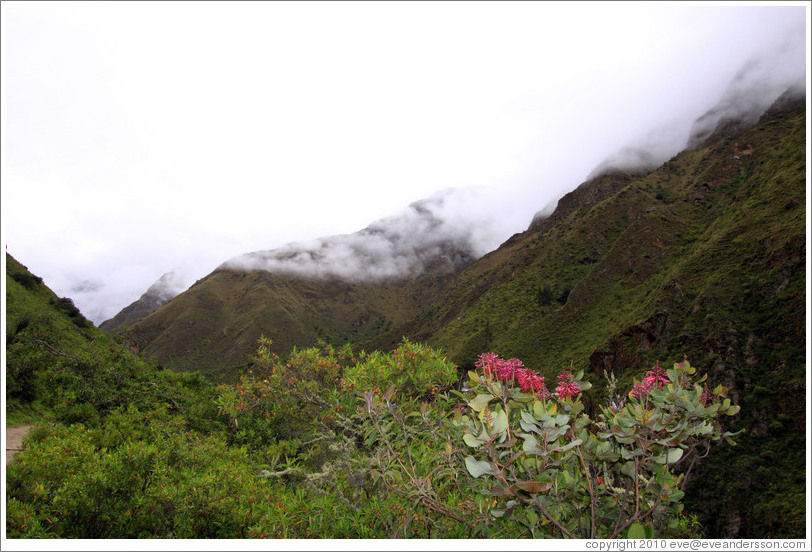 Flowers and seen from the Inca Trail.