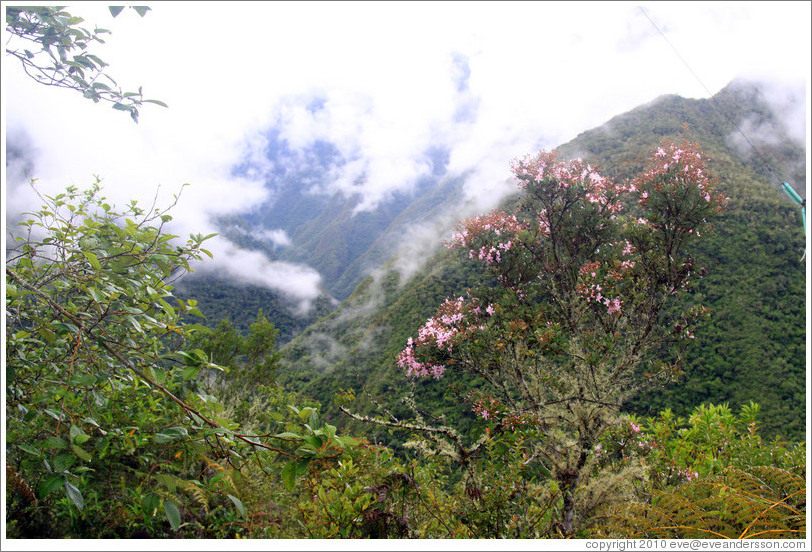 Pink flowers and mountains seen on the Inca Trail.