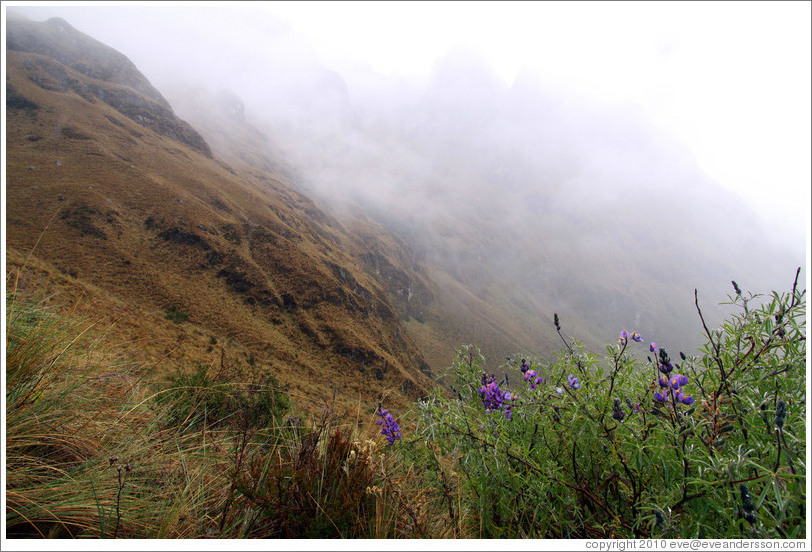 Purple flowers seen on the Inca Trail.