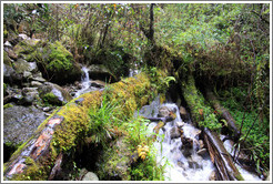 Stream with moss-covered log at the side of the Inca Trail.