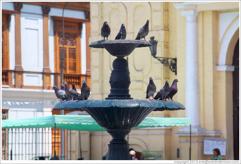 Fountain with pigeons, Iglesia de San Francisco, Historic Center of Lima.