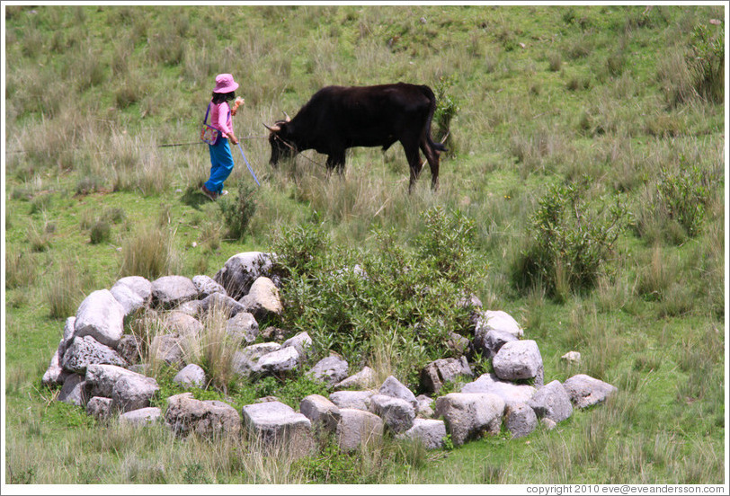 Child and bull near the Puca Pucara ruins.