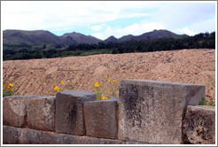 Blocks and flowers, Sacsayhuam�n ruins.