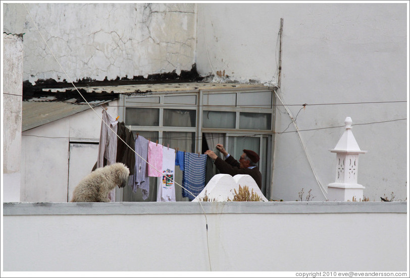 Man hanging clothes, with a dog, on his balcony.