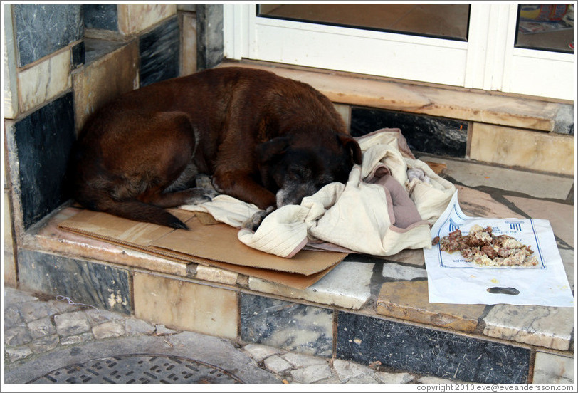 Homeless dog with cardboard box, blankets, and food, Rua 25 de Abril.