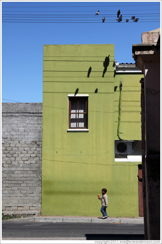 Boy walking underneath pigeons and their shadows. Chiappini Street, Bo-Kaap.