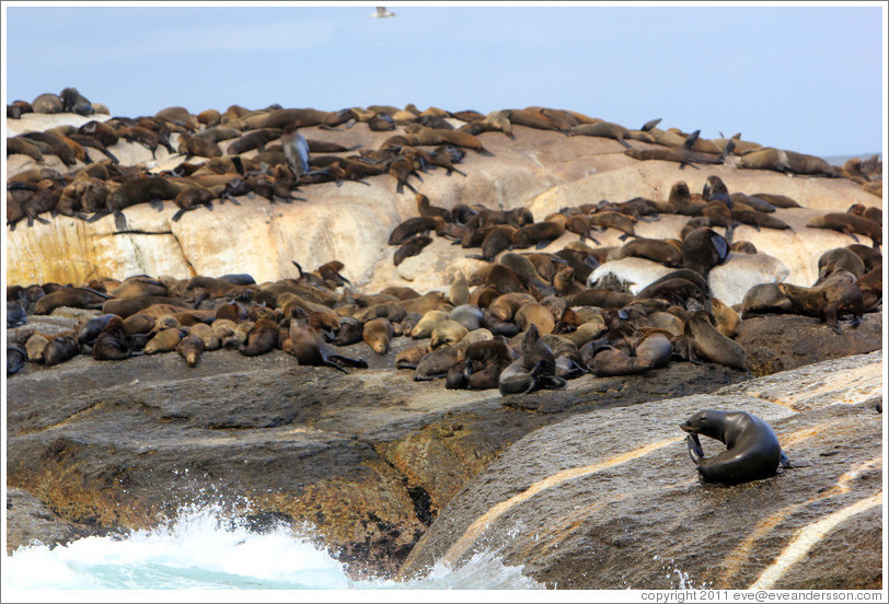 Home > Cape Town, South Africa > Seal Island, Hout Bay. Eos