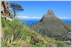 Lion's Head, viewed from Table Mountain.