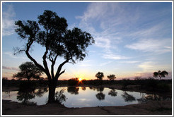 Pond in the African savanna at sunset.