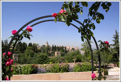 Roses and view of the Alhambra from Generalife.