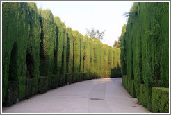 Hedges, Alhambra.