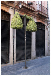 Street lamp covered with leaves, Calle de los Mesones, city center.