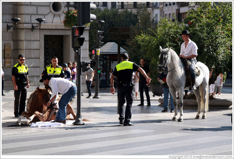 Police help a horse that has fallen stand up. Calle Reyes Cat?os, city center.