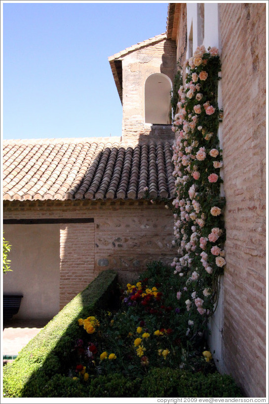 Wall of roses.  Palacio del Generalife.