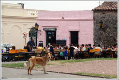 Dog standing in front of the restaurant Pulper?de los Faroles, Barrio Hist?o (Old Town).