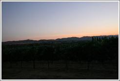 Fields in the evening.  Deer Ridge Vineyards.