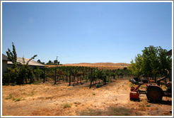 Vineyard.  El Sol Winery.