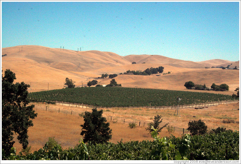 Vineyard patch among dry hills.  Les Chênes Estate Vineyards.