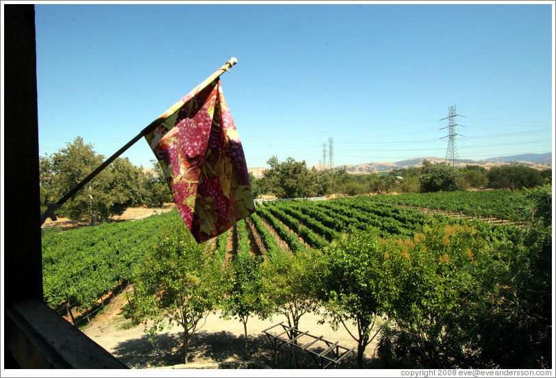 Flag on balcony overlooking vineyard.  Murrieta's Well.
