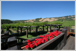 Deck and picnic area.  Navarro Vineyards.