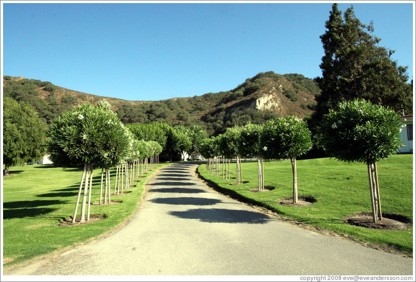 Driveway.  Rancho Sisquoc Winery.