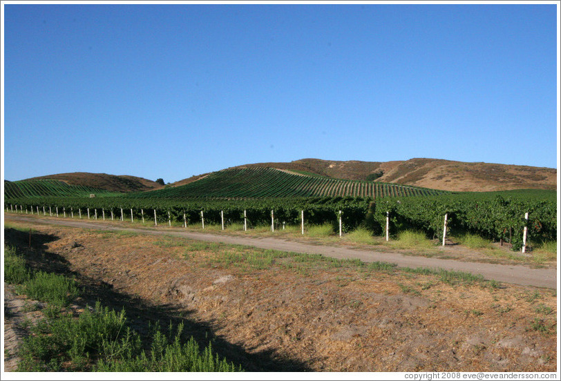 Vineyards and hills.