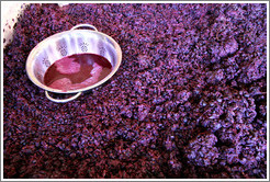 Must (fermenting grape juice), Poetic Cellars‎.