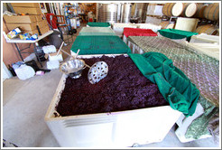 Must (fermenting grape juice), with juice-pulling implements, Poetic Cellars‎.